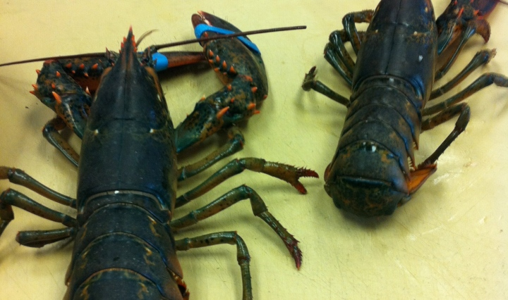 The Meaning of Significant - Culinary - Lobsters - Between the Tines